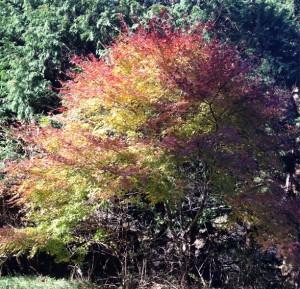 葉のコントラスト