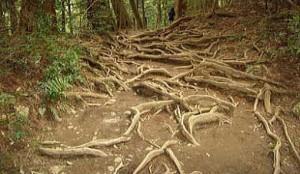 木の根の道