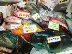 アオブダイとカラフルな魚