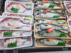 レンコ鯛と生サバ