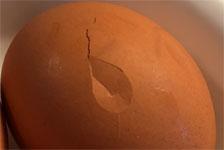 卵のひび割れ