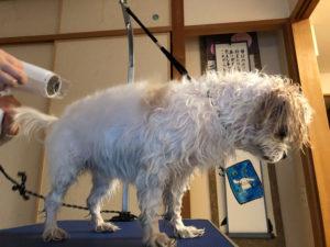 ブロー中の犬2
